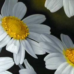 chrisanthemum.jpg